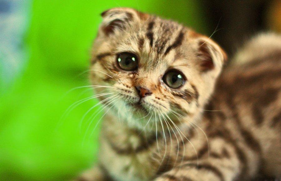 maltraitance animal (Magà Ettori - Blog)
