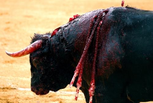 taureau-corrida (Magà Ettori - Blog)