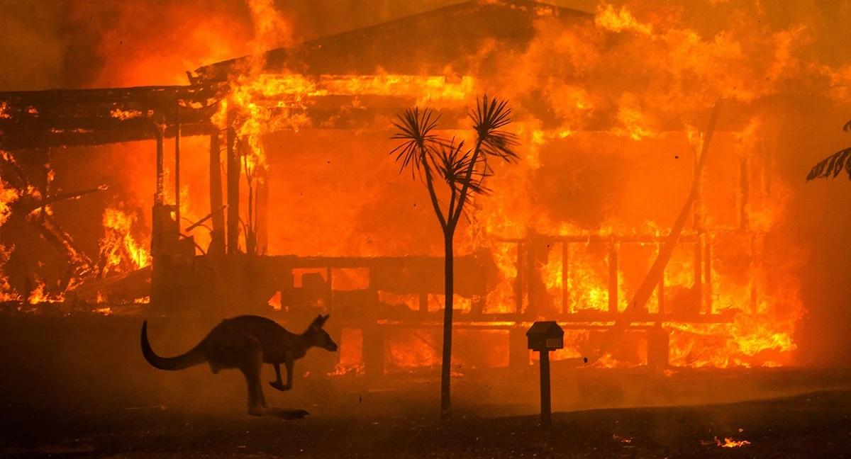 incendie-australie-INSAVE Kangourou